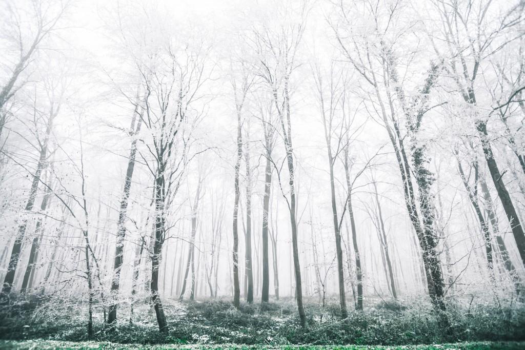 bosque setas